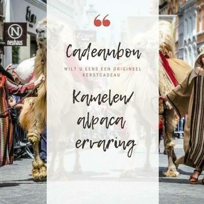 Wandeling/ ritje Kameel - 1 u ( 1 kameel)