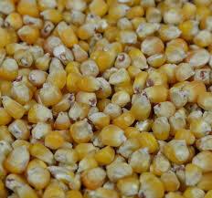 Franse maïs  - 20 kg