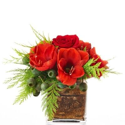 Red Amaryllis Joy