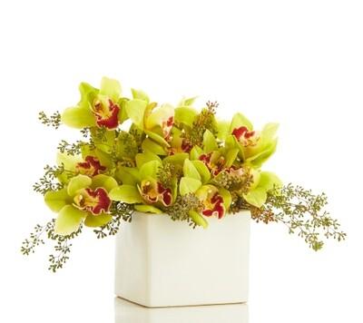 Organic Cymbidium Orchid