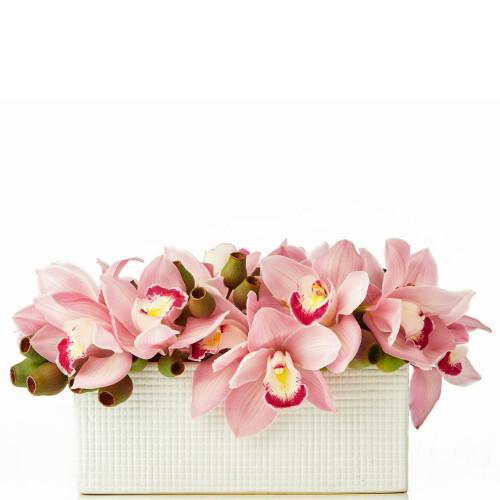 Exotic Cymbidium Orchid