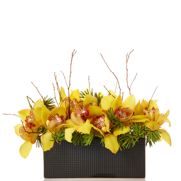 Exotic Cymbidium Orchid
