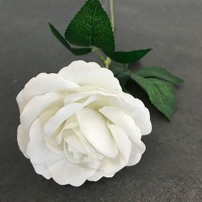 Samettiruusu, valkoinen