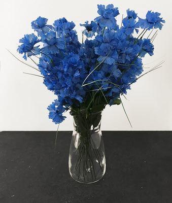 Ruiskaunokki, sininen