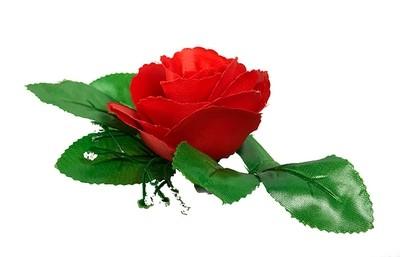 Ruusu-kukkapää lehdillä, punainen