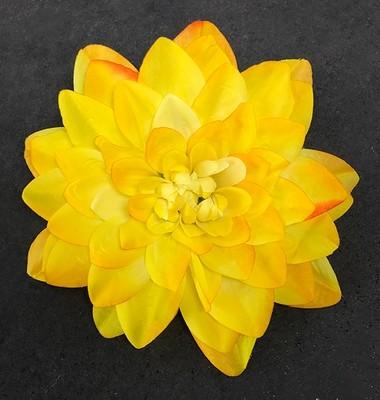 Daalia-kukkapää, keltainen