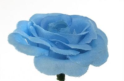 Miniruusu-kukkapää, sininen
