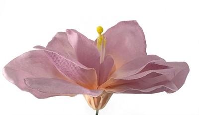 Amaryllis-kukkapää, vaalea lila