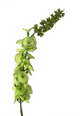 Kotilokukka-kukkapää, vihreä