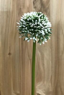 Sipulin kukka, valkoinen