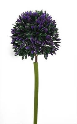 Sipulin kukka, violetti