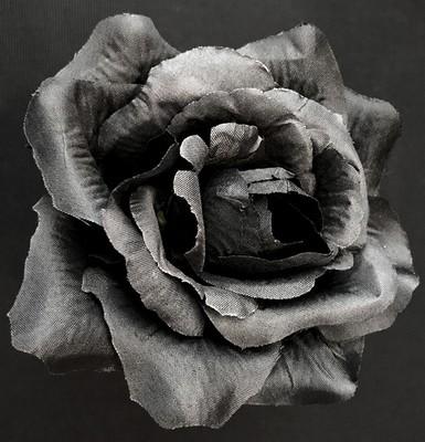 Pensasruusu-kukkapää, musta