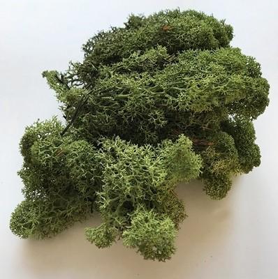 Luonnon jäkälä 35g, vihreä