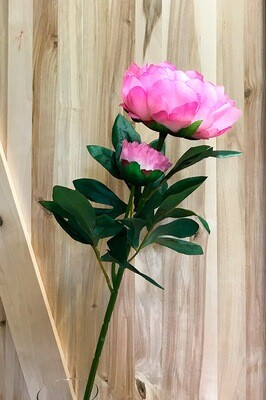 Pioni, vaaleanpunainen