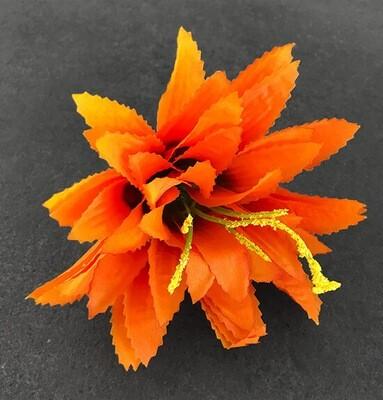 Agave-kukkapää, oranssi