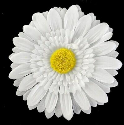 Gerbera-kukkapää, valkoinen