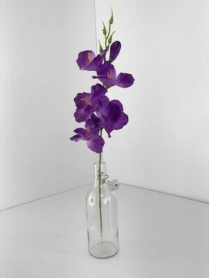 Miekkalilja, violetti