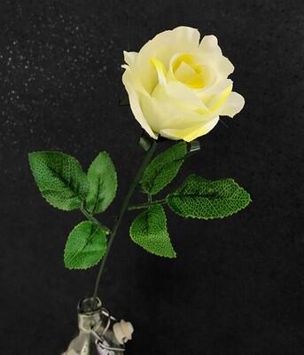 Ruusu, keltainen/kerma