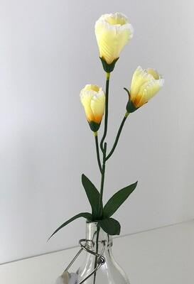 Krookus vaalean keltainen