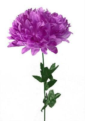 Krysanteemi, vaalea violetti