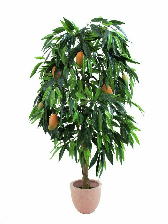 Mangopuu hedelmillä 165cm