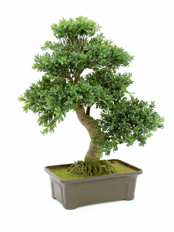 Bonsai tekopuu ruukussa 61cm