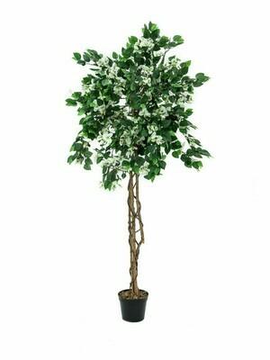 Ihmeköynnöspuu (bougainvillea) valkoinen 150cm