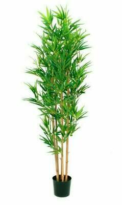 Tekokasvi Bambupensas ruukussa 150cm