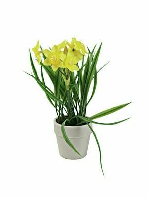 Narsissi ruukussa 22cm keltainen
