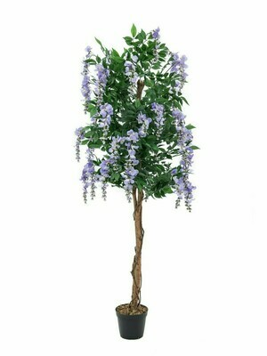 Wisteria (sinisade) tekopuu 150cm laventeli