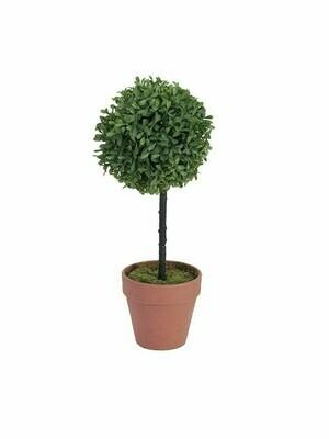 Puksipuu ruukussa 39cm