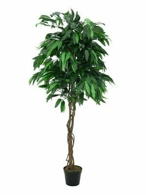 Mangopuu ruukussa 180cm
