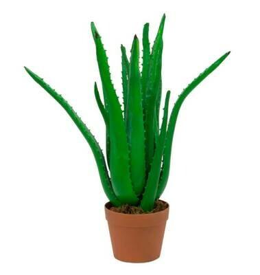 Tekokasvi Aloe Vera ruukussa 63cm