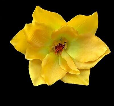 Magnolia-kukkapää, keltainen