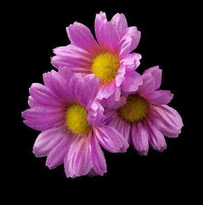 Kamomilla-kukkapää, violetti