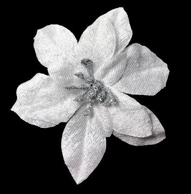 Joulutähti-kukkapää, helmiäisvalkoinen