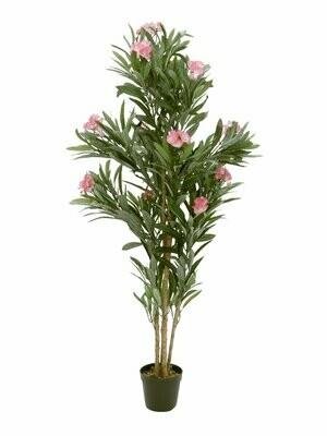 Oleanteri vaaleanpunaiset kukat 150cm