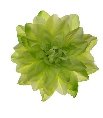 Iso daalia-kukkapää, vihreä