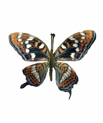 Perhonen tikkuvarrella