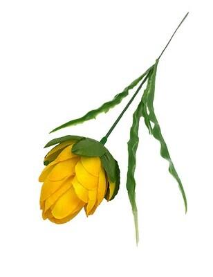 Protea, keltaoranssi