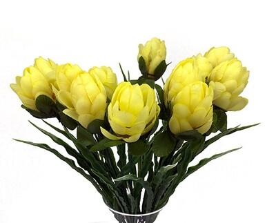 Protea, keltavihreä