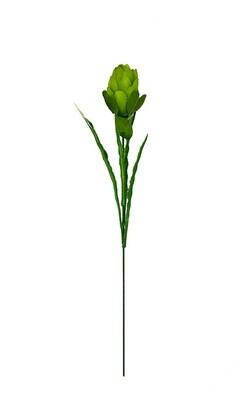 Protea, vihreä