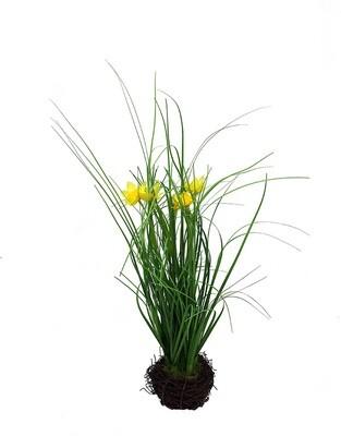 Narsissi korissa 35cm