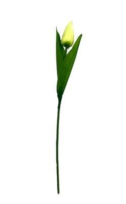 Tulppaani, valkoinen/vihreä