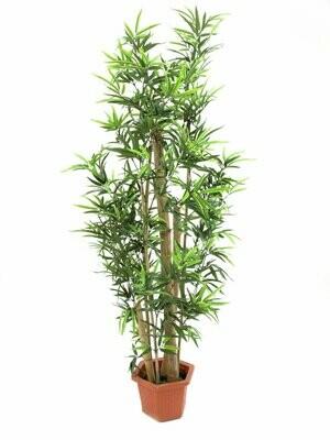Bambu tekokasvi ruukussa 225cm