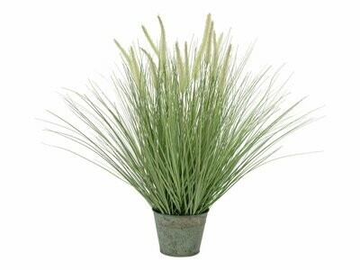 Koristeheinäkasvi ruukussa 70cm