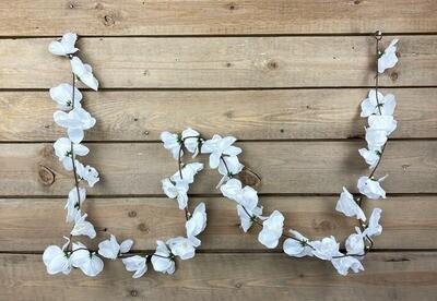 Orkideaköynnös, valkoinen