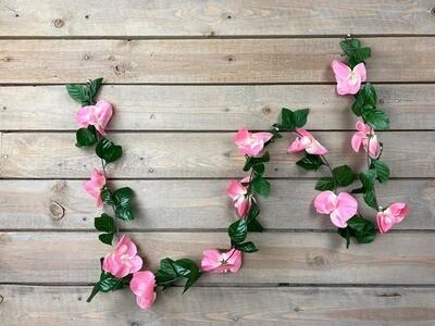 Orkideaköynnös 1,7m rosa