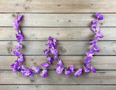 Orkideaköynnös, violetti