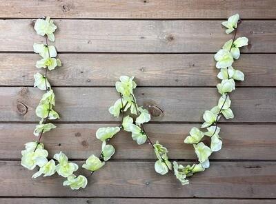 Orkideaköynnös, vaalean vihreä